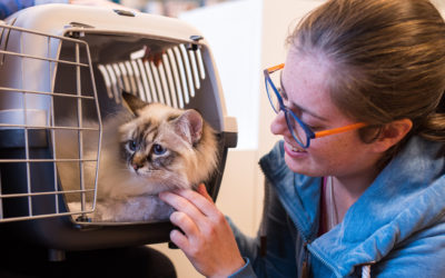 Met uw kat naar de dierenarts? Lees de tips!