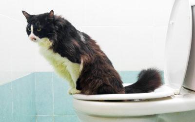 Urine van je kat opvangen doe je zo!