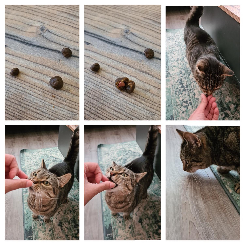 easypill-kat-medicijn-geven